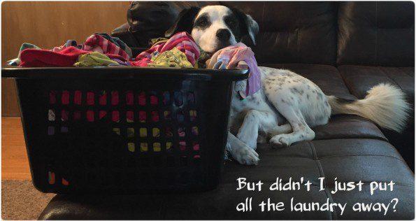 Cooper-Laundry