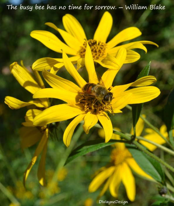 The busy bee has no time for sorrow. - William Blake