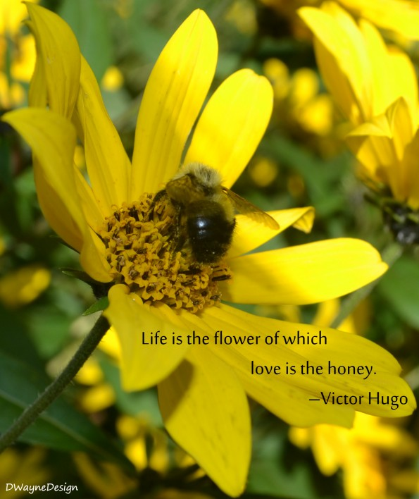 Life is the flower of which love is the honey. - Victor Hugo