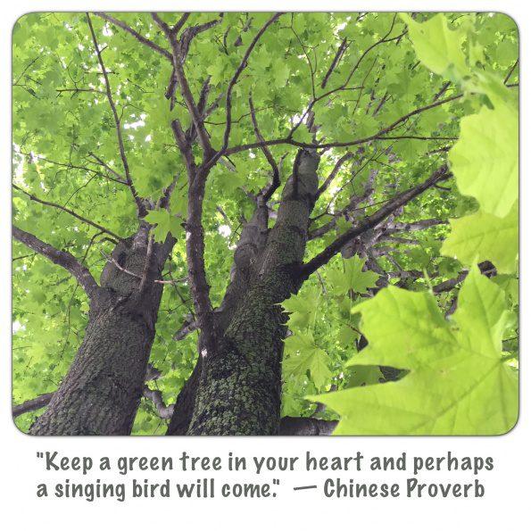 dwd-20150526-Green-Tree-Heart-Singing-Bird