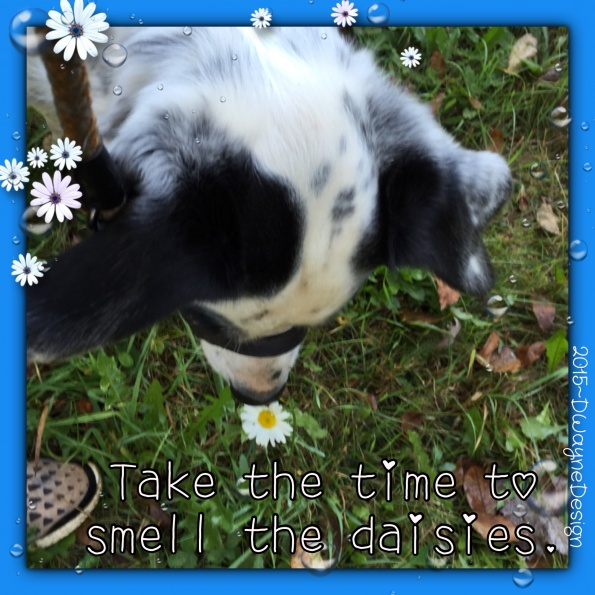 Take the time to smell the daisies.