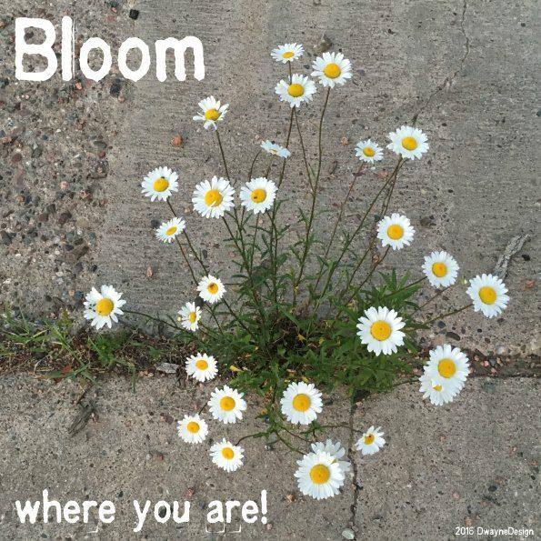 bloom-2016-06-18