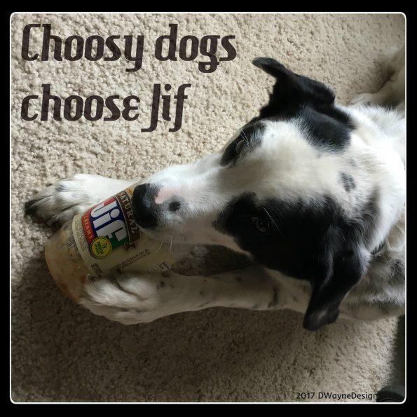 Choosy dogs choose Jif!
