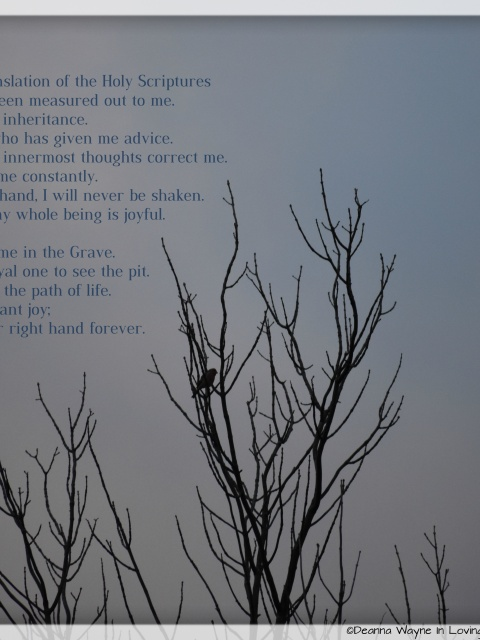 Psalms 16:1-11; Lone female cardinal a top a bare tree.