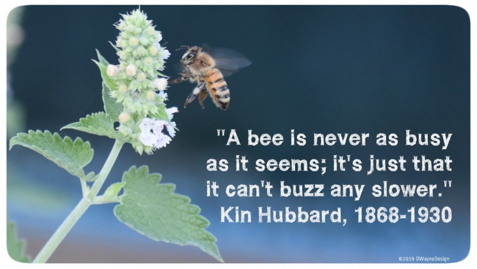 A bee is never as busy as it seems; it's just that it cant buzz any slower.
