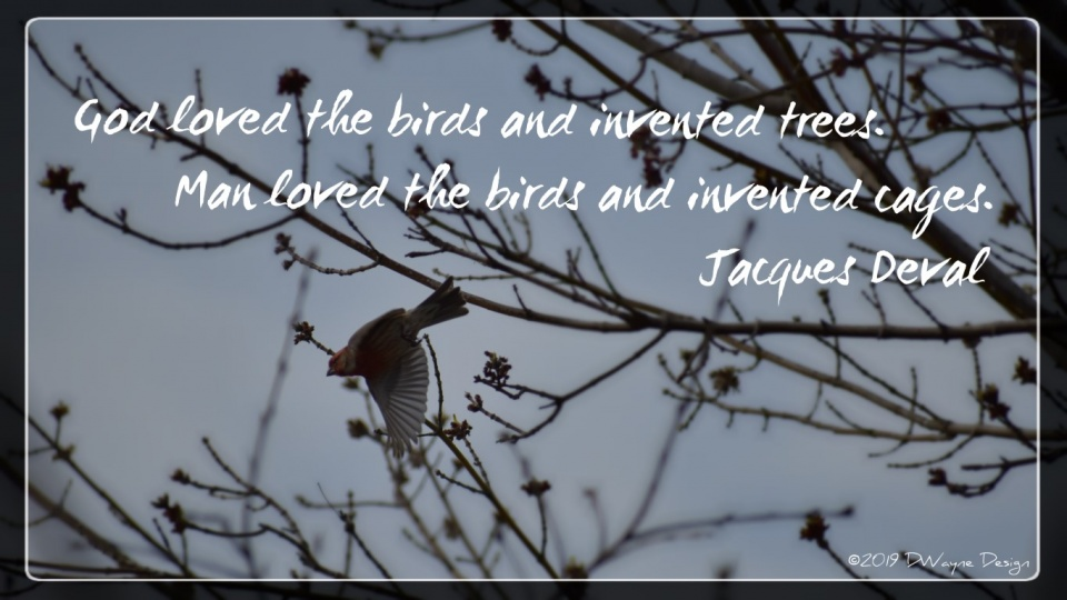 """""""God loved the birds and invented trees. Man loved the birds and invented cages."""" Jacques Deval, 1895-1972"""