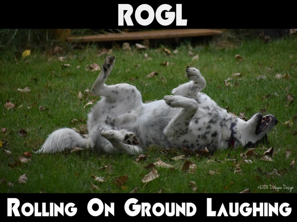 Cooper, nine year old Australian Cattle Dog and Mountain Cur mix rolling on ground laughing!