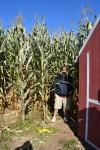 corn-maze-2014-09-025-2