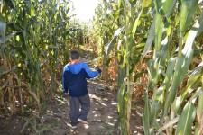 corn-maze-2014-09-043-2