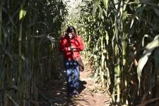 corn-maze-2014-09-050-2