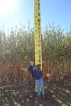 corn-maze-2014-09-414-2