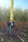 corn-maze-2014-09-416-2