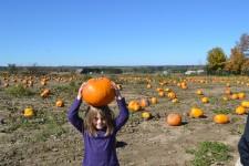 pumpkin-patch-2014-09-504-2